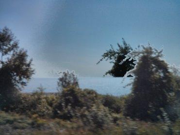 Tree doubled, Lake Ontario.